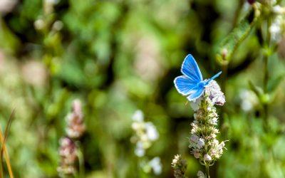 Gedea, gli obiettivi di sviluppo sostenibile e le ali di una farfalla
